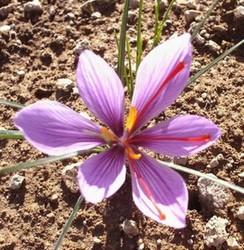 fleur29.jpg - Voir en grand