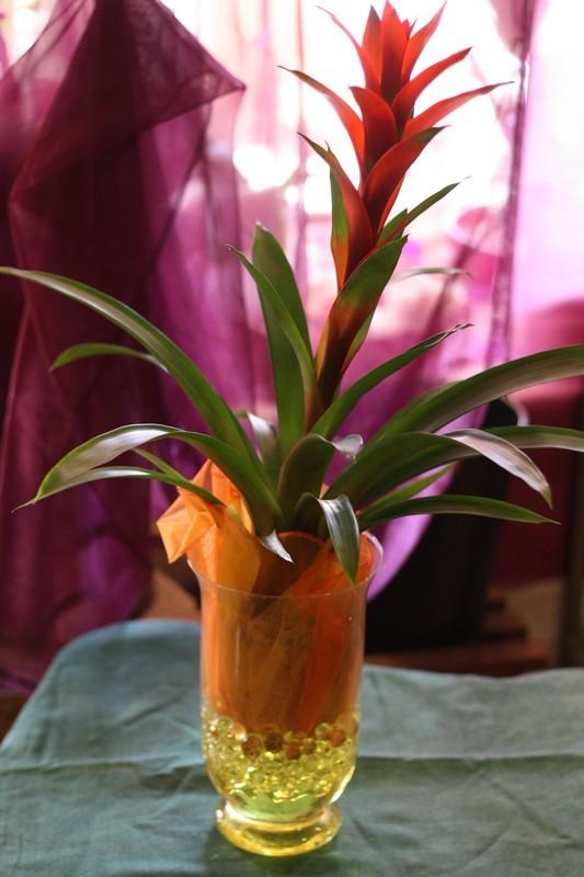 Plantes vertes cactus et d corations isabelle fleurs for Plantes vertes exterieur
