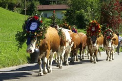 Transhumance en Alsace - Terroirs et traditions de nos régions ! - TCHIZZ pour CARS FERRY - Voir en grand