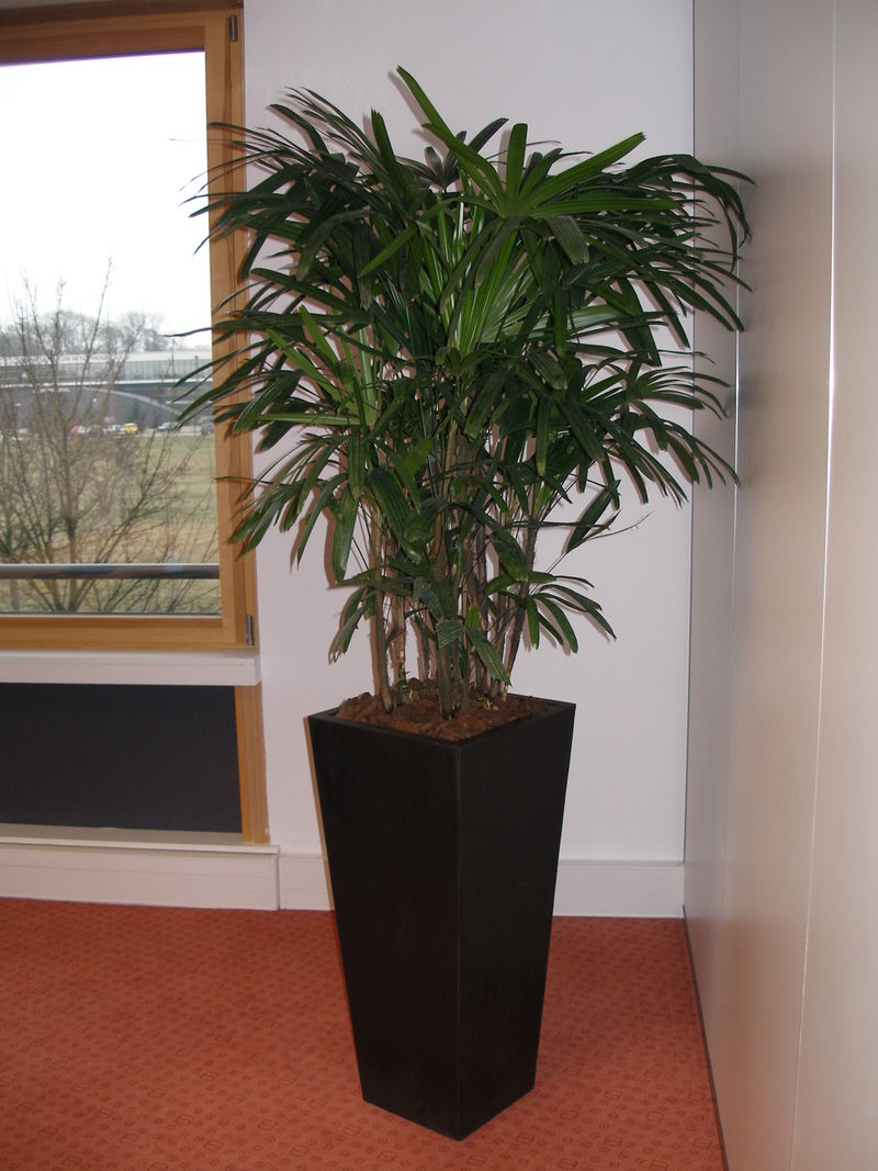 Quelle plante quelle d pollution vatry fleuriste com for Plante verte haute