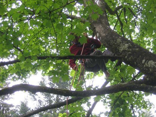 equiper les arbres - Voir en grand