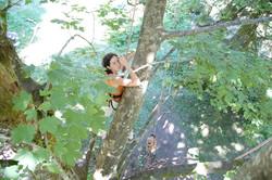 escalade des arbres - Voir en grand