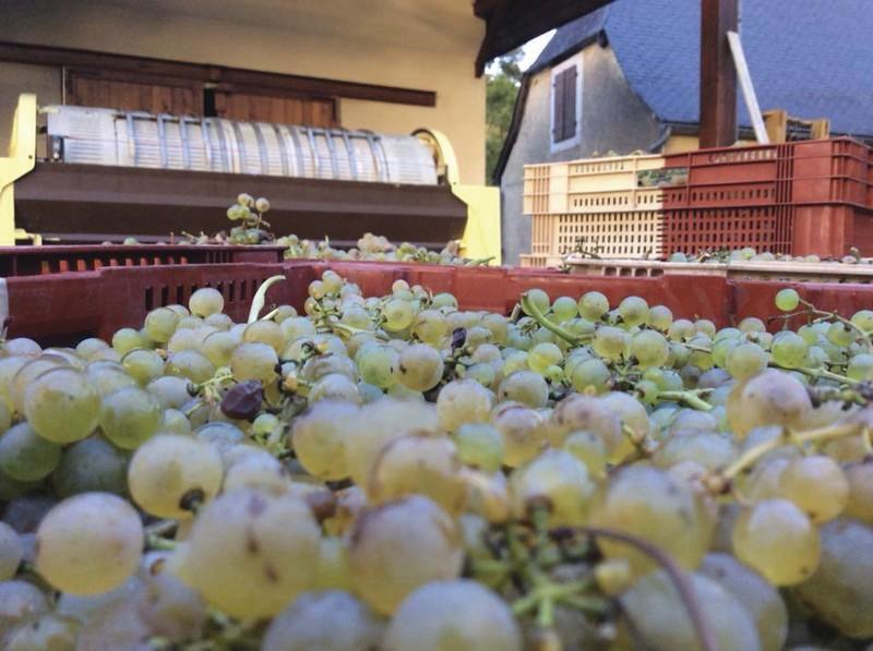 Arrivée du raisin à l'Escudé - Les Vins de l'Escudé en photo - Osez L'Escudé - Voir en grand