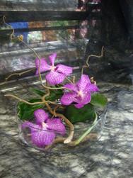 centre de table orchidée rose Vanda - Voir en grand