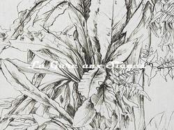 Tissu Pierre Frey - Japalao - réf: F3369.001 Fusain ( détail ) - Voir en grand