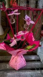 bouquet poche d'eau orchidee phalaenopsis - Voir en grand