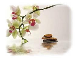 fleur de bach 4.jpg - Voir en grand
