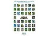 Poster 38 fleurs Bach - Santé & Bien Etre Brive - Sylvie Richard - Voir en grand