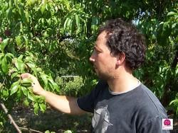 Fruirouge-peche-de-vigne - Voir en grand