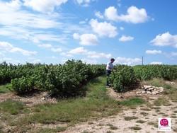 Cassis de Bourgogne Ferme Fruirouge - Voir en grand