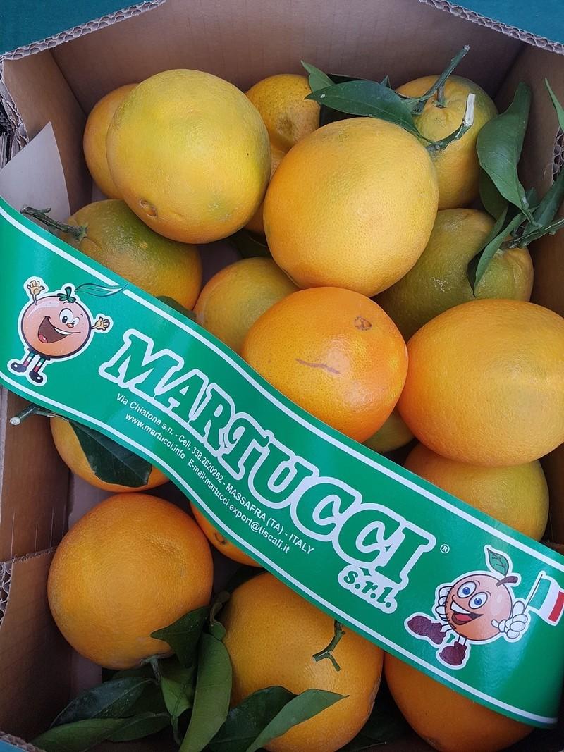 Orange des Pouilles  - Fruits - LEPY  - Voir en grand