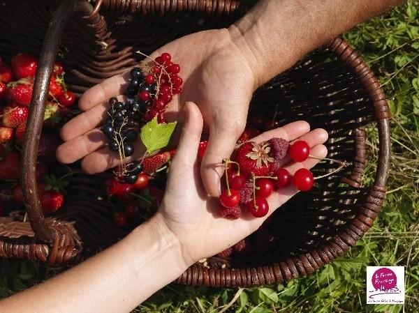 fruits-rouges-ferme-Fruirouge.jpg - Voir en grand