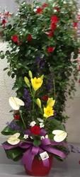 Plante piquè de fleurs - Voir en grand