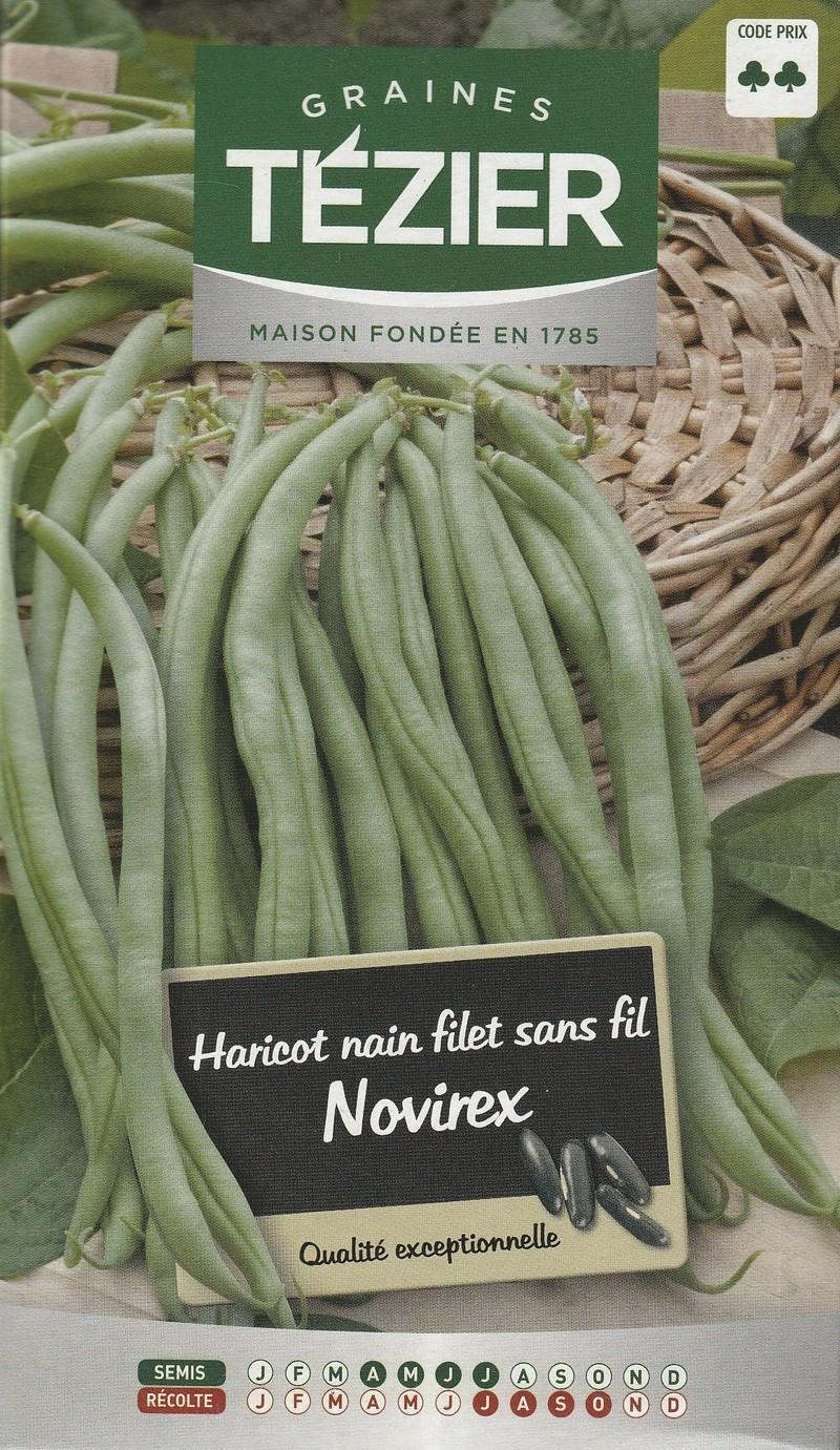 haricot nain a filet sans fil novirex tezier graine semence potager semis boite - Voir en grand