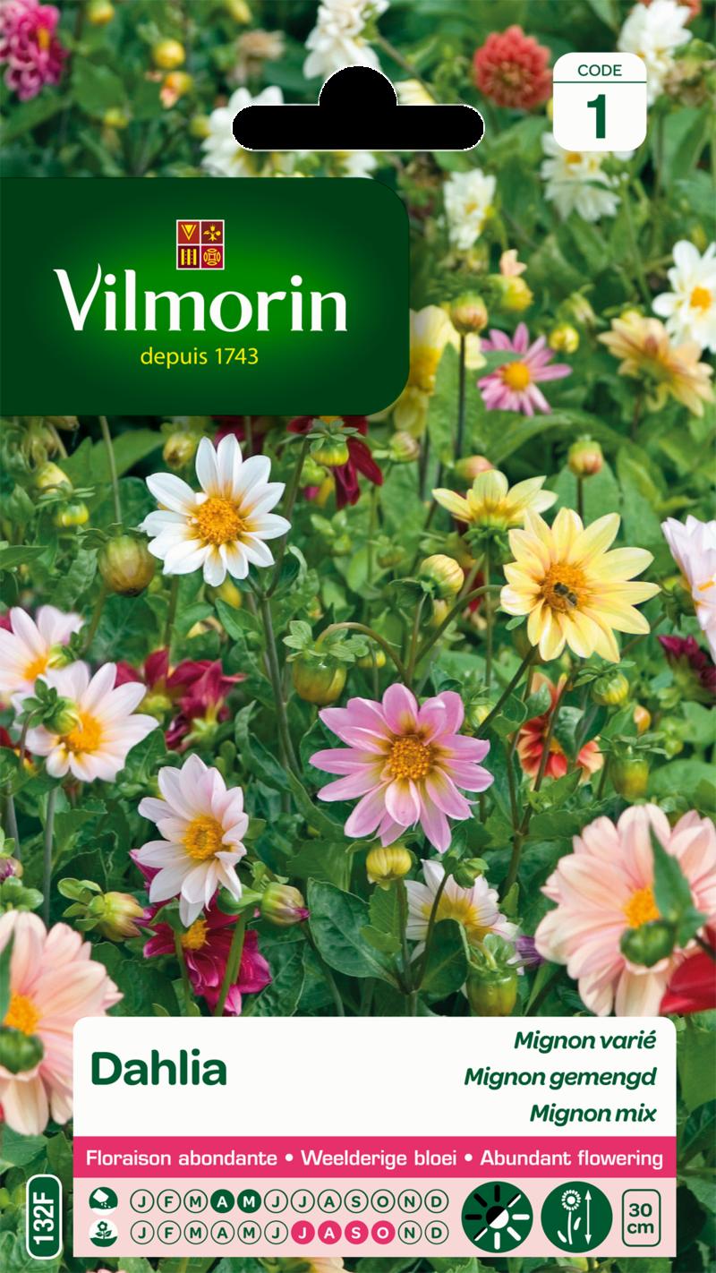 dahlia mignon varie vilmorin graine semence sachet massif - Voir en grand
