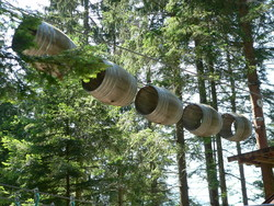 Indian Forest 036.jpg - Voir en grand