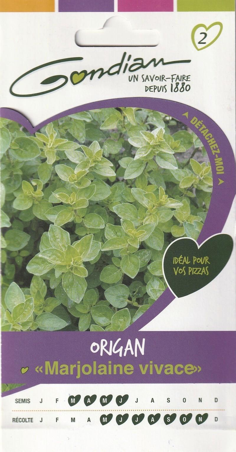 origan marjolaine vivace gondian graine semence aromatique potager sachet semis - Voir en grand