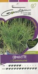 ciboulette commun gondian graine semence aromatique potager sachet semis