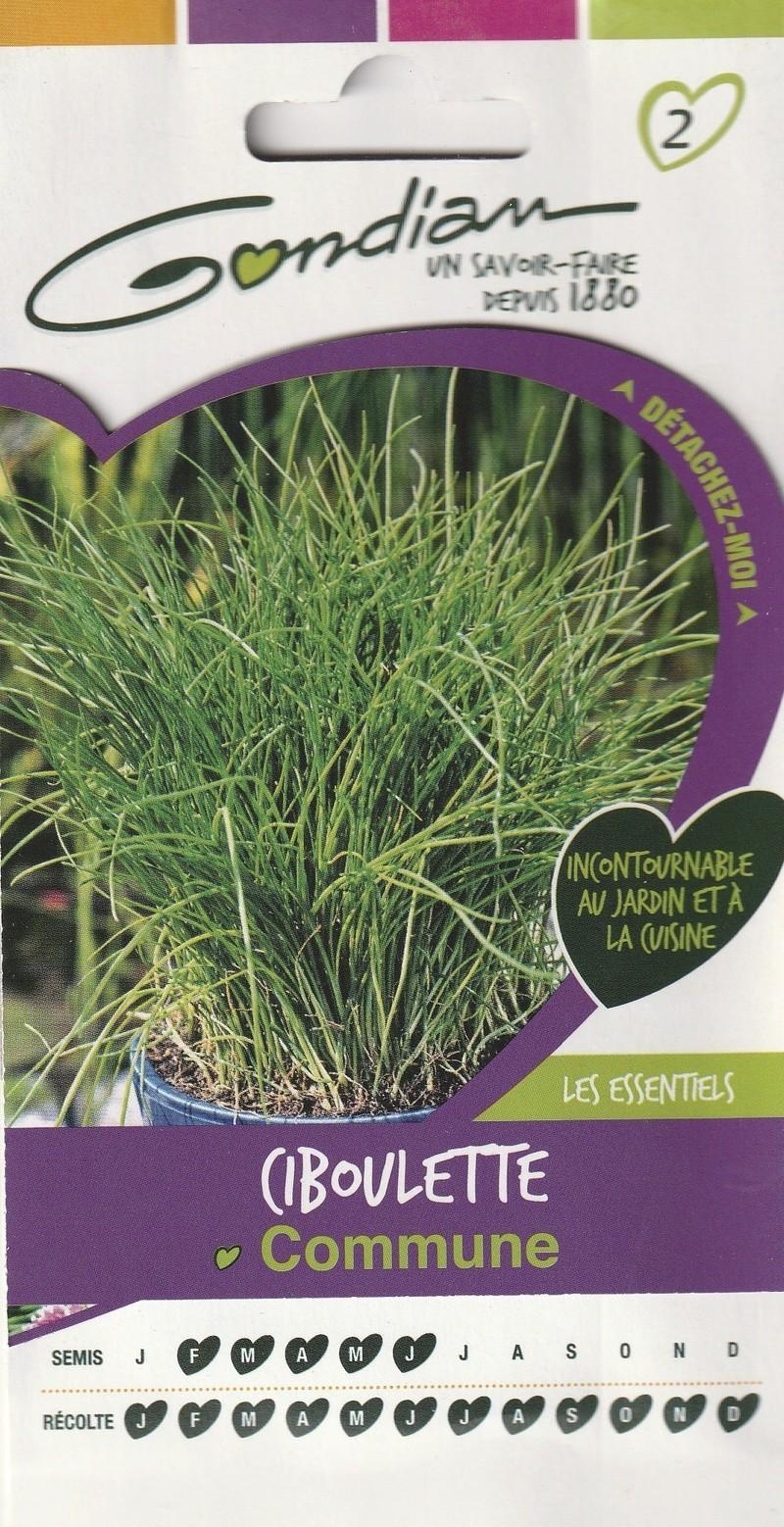 ciboulette commun gondian graine semence aromatique potager sachet semis - Voir en grand