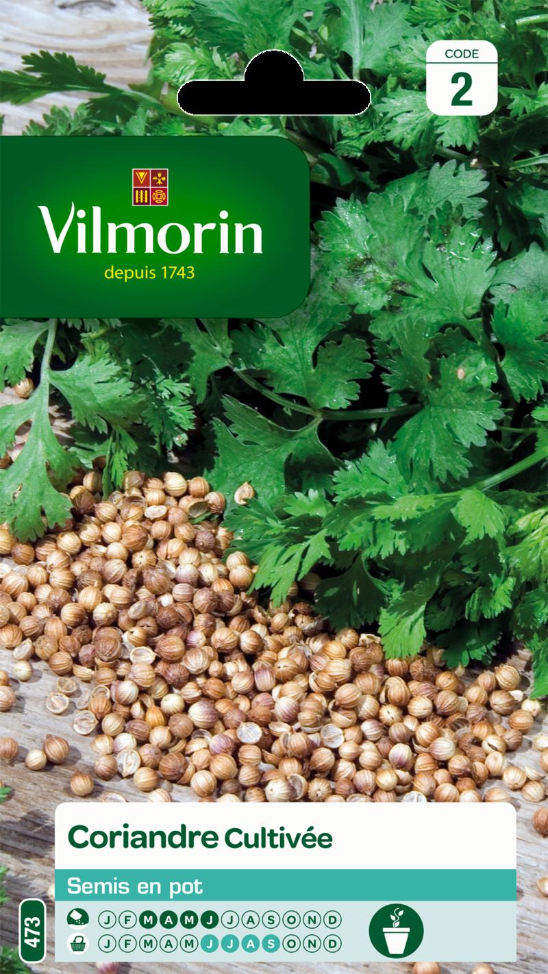 coriandre cultivee vilmorin graine semence aromatique potager sachet semis - Voir en grand