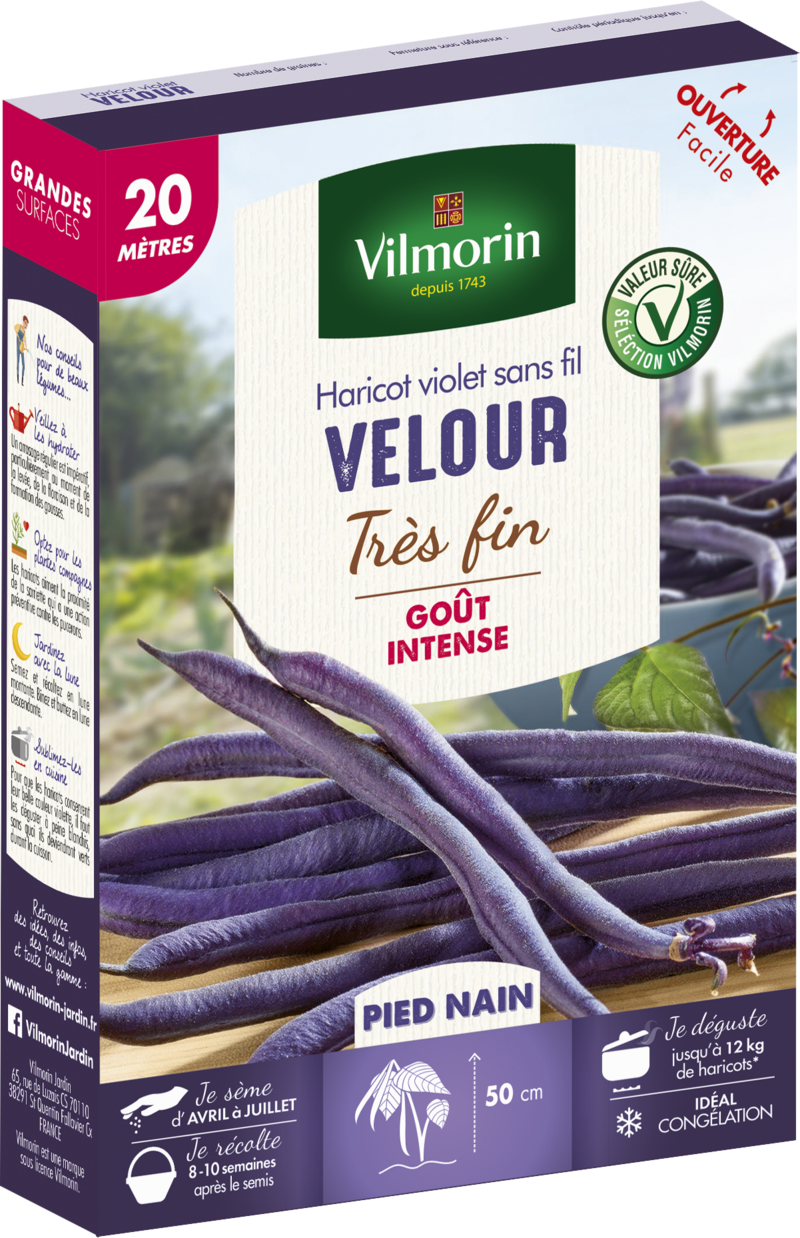 haricot nain mangetout velour violet vilmorin graine semence potager boite semis - Voir en grand
