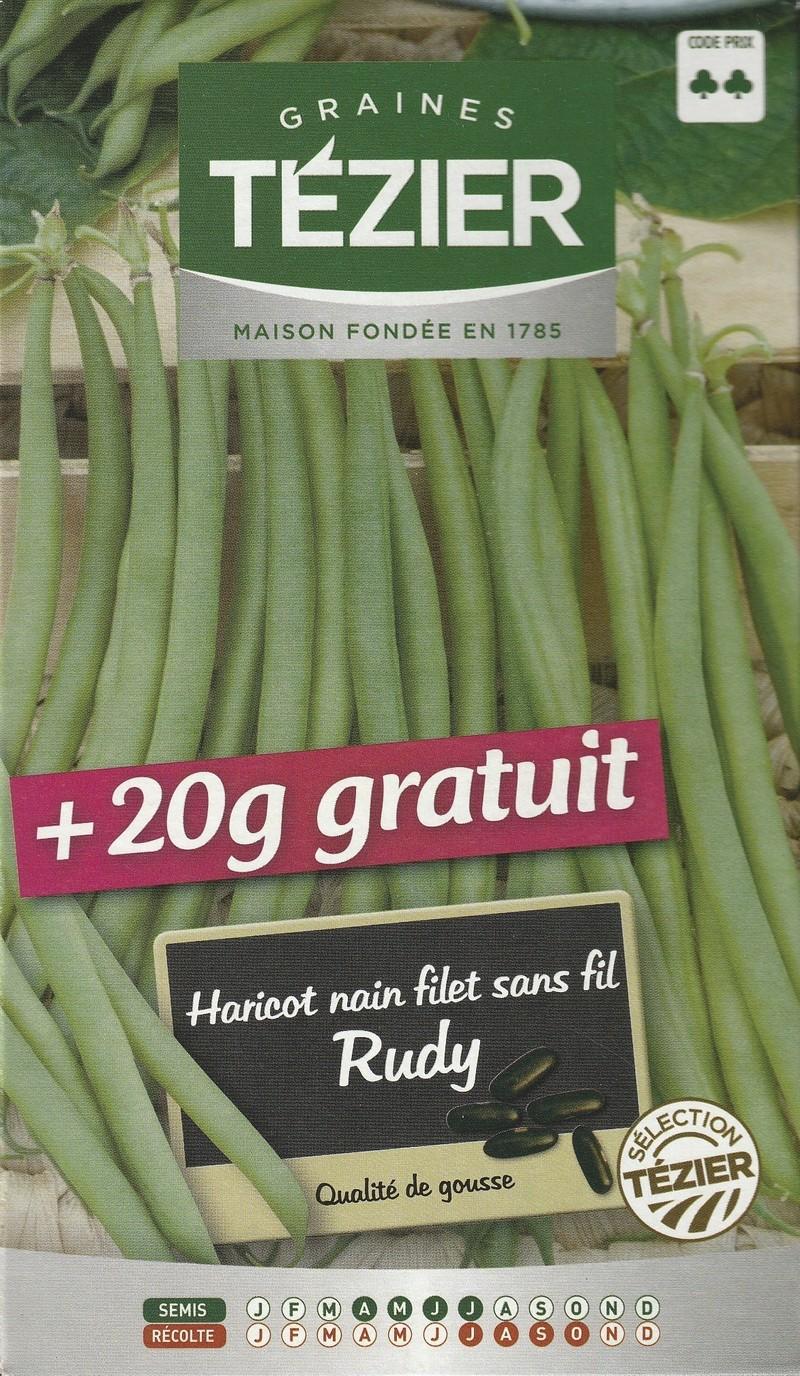 haricot nain a filet sans fil rudy tezier graine semence potager semis boite - Voir en grand