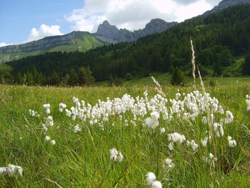 Le Cornafion vu du vallon de la Fauge.                                          ( Photo : O. FAVRE ) - Voir en grand