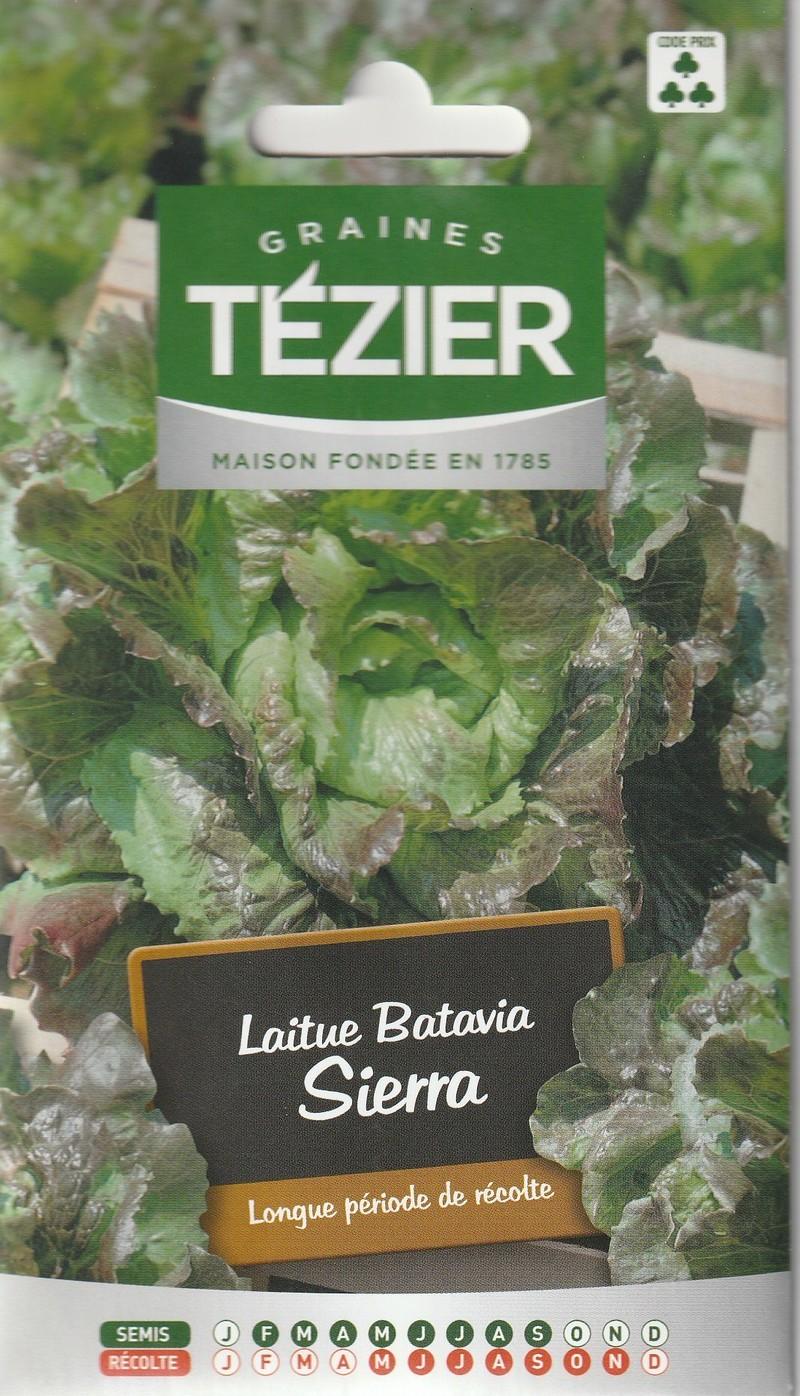laitue batavia sierra tezier graine semence potager semis sachet - Voir en grand