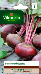 betterave d'egypte vilmorin graine semence potager sachet semis