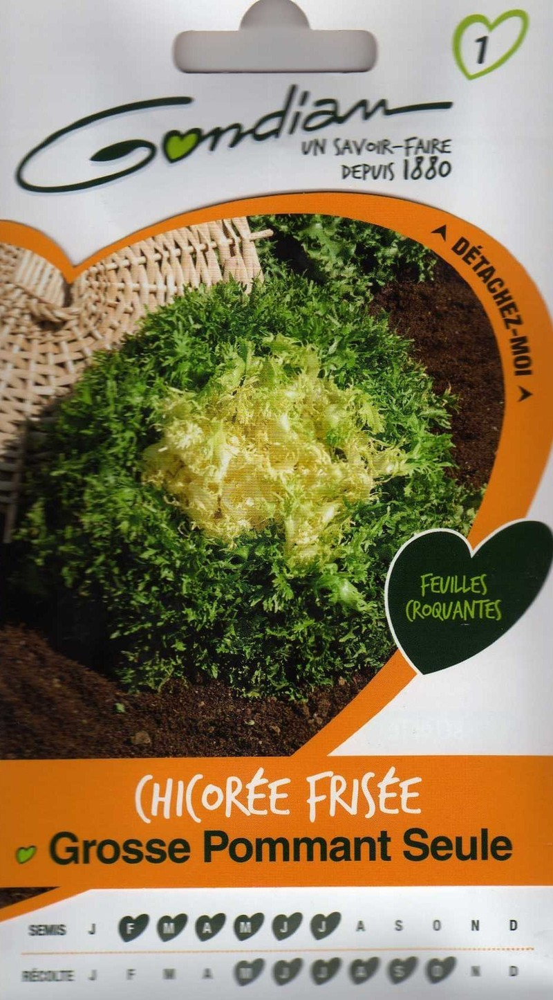 chicoree frisee grosse pommant seule gondian graine semence potager semis sachet - Voir en grand
