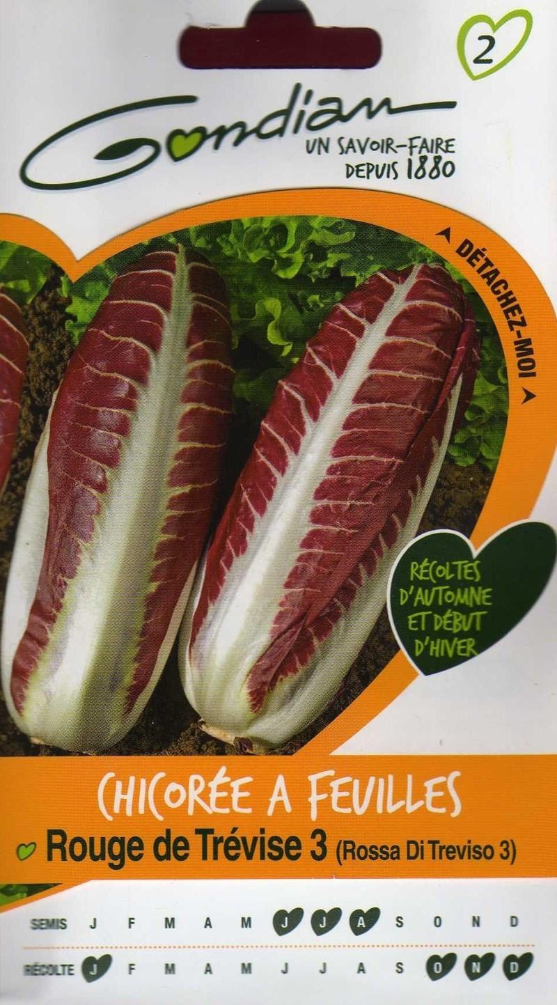 chicoree a feuilles rouge de trevise 3 gondian graine semence potager semis sachet - Voir en grand