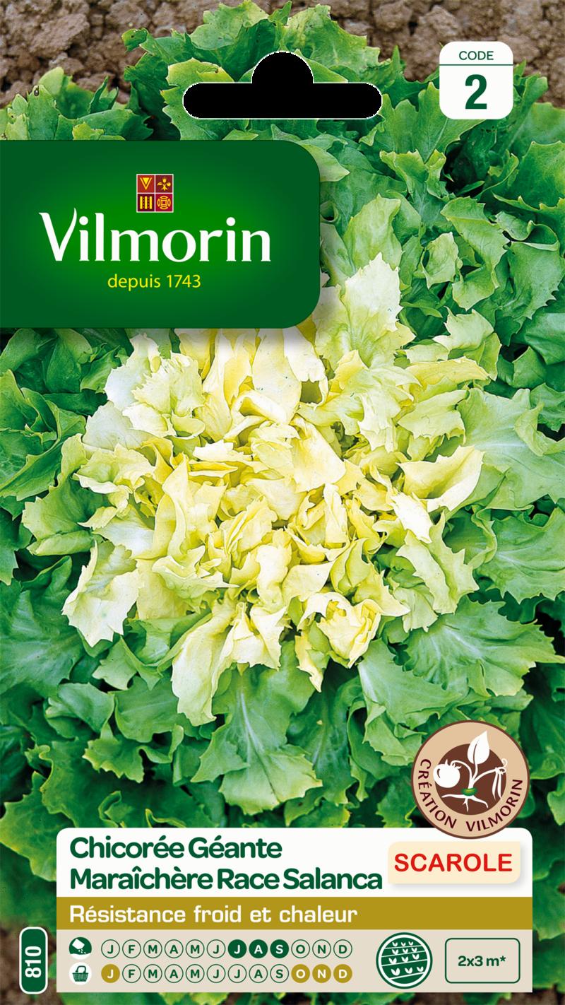 chicoree scarole geante maraichere race salanca vilmorin graine semence potager semis sachet - Voir en grand