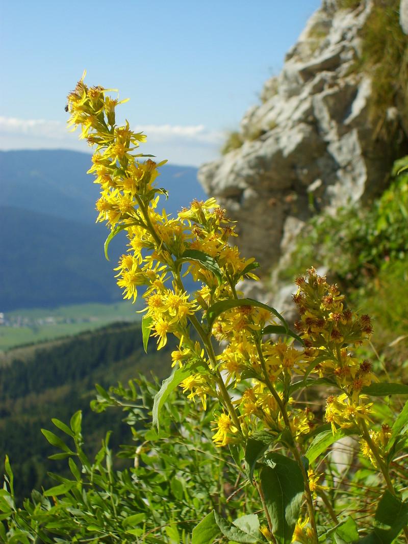 Vue du Col Vert    ( Photo : O. FAVRE ) - Voir en grand