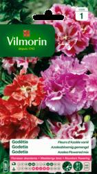 godetia a fleurs d'azalee varié vilmorin graine semence sachet massif - Voir en grand