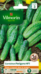 cornichon parygino hybride f1 vilmorin graine semence potager semis sachet - Voir en grand