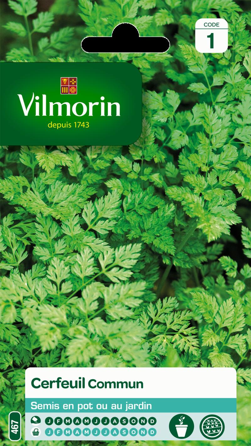 cerfeuil commun vilmorin graine semence aromatique potager sachet semis - Voir en grand
