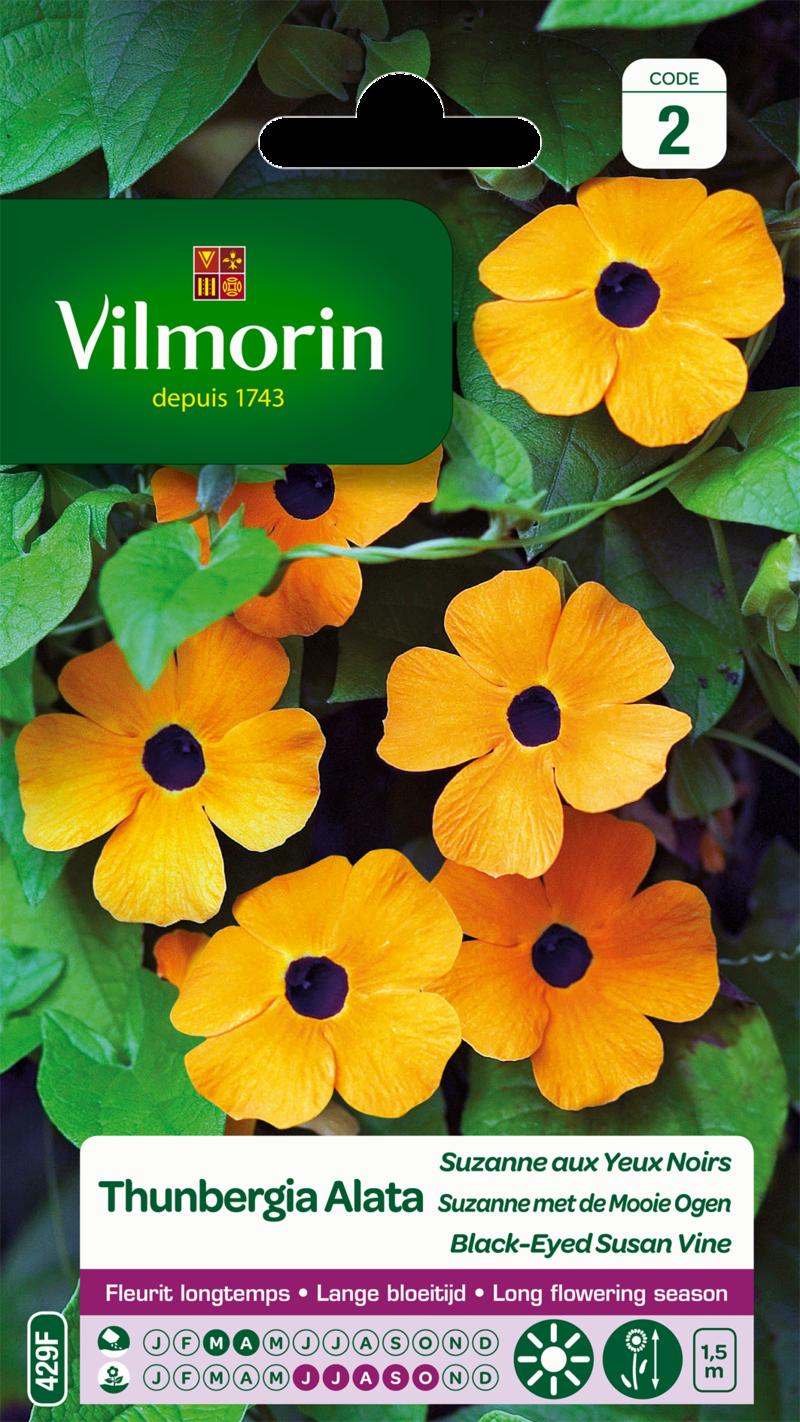 thunbergia alata suzanne aux yeux noirs vilmorin graine semence sachet massif - Voir en grand