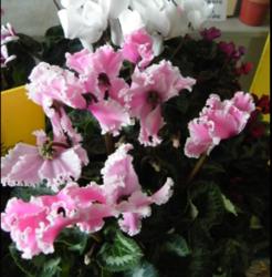 /uploads/indre/Produit/8d/prod_photo1_16238_1477314944.png - Voir en grand