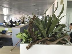 Jardinières de plantes grasses... artificielles