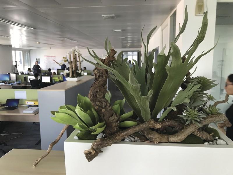 Jardinières de plantes grasses... artificielles - Voir en grand