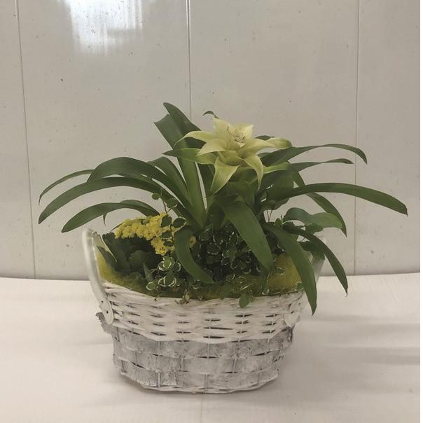 Compostion Bromelia et calenchoe - Voir en grand