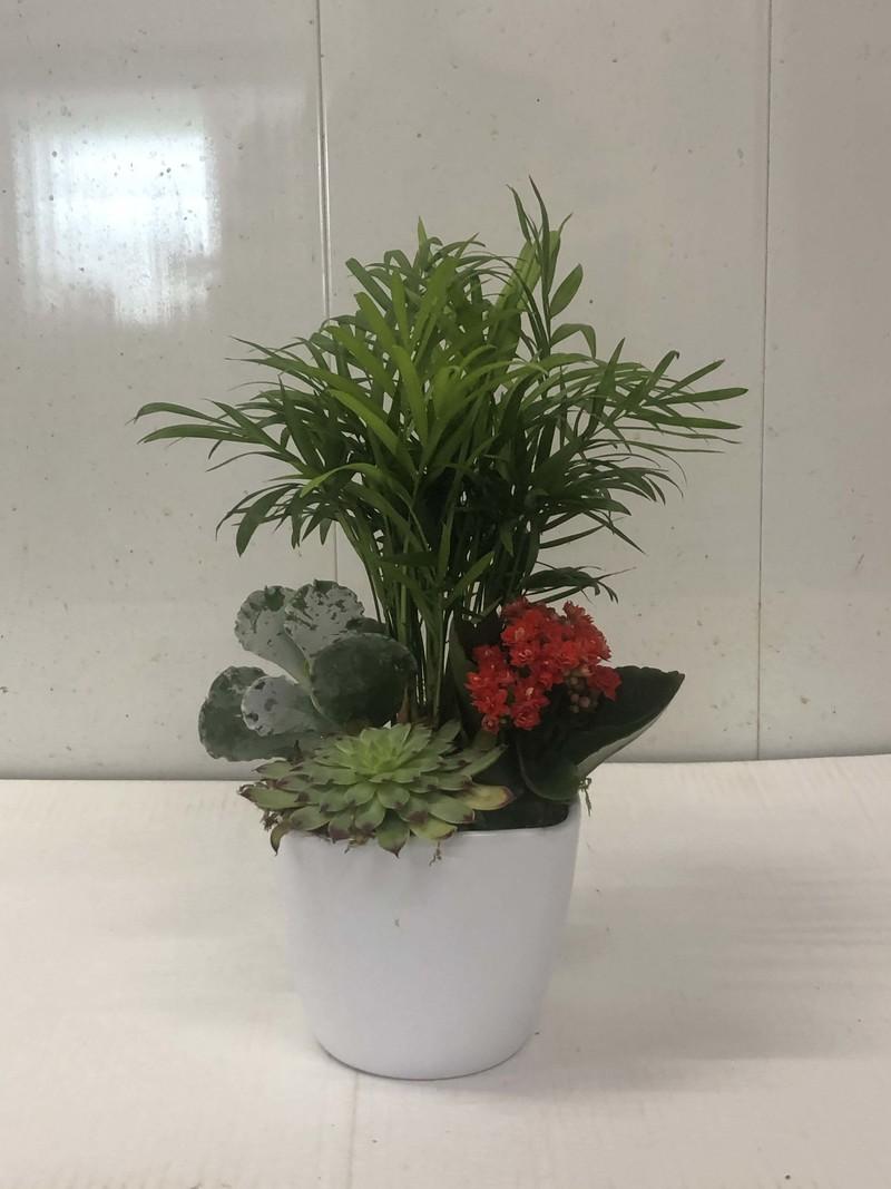 Composition Calenchoe et plantes grasses - Plantes  - Fleurs de l'est  - Voir en grand