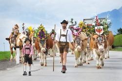 La descente des Alpages au Tyrol - Escapades et Séjours - TCHIZZ pour CARS FERRY - Voir en grand