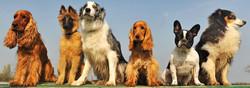 Choisir son chien - MAFRA Point Vert dans les Vosges - Voir en grand