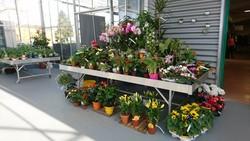 Plantes fleuries MAFRA Point Vert Rambervillers - Voir en grand