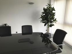Plante artificielle dans une salle de réunion