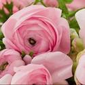 Espace Fleurs- froissy