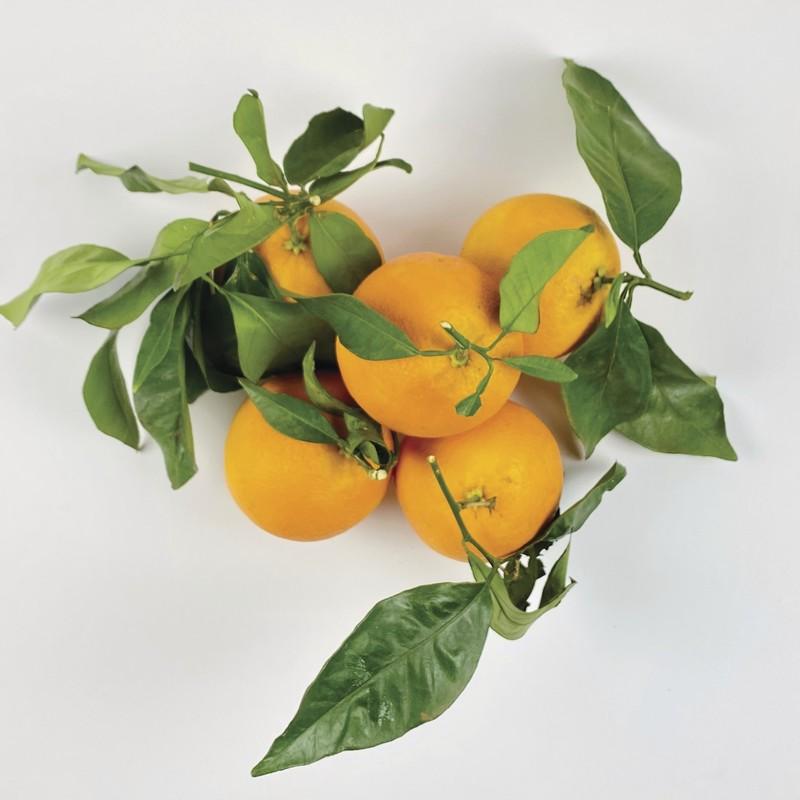Orange portugaise - Agrumes - TOMATE CERISE - Voir en grand